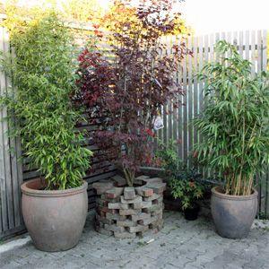 k belpflanzen f r den balkon bytim topf containergarten balkon pflanzen k belpflanzen. Black Bedroom Furniture Sets. Home Design Ideas