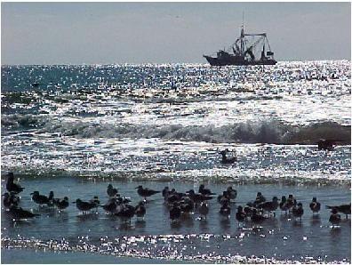 Calabash nc love it vacation at the beach pinterest for Calabash fishing fleet