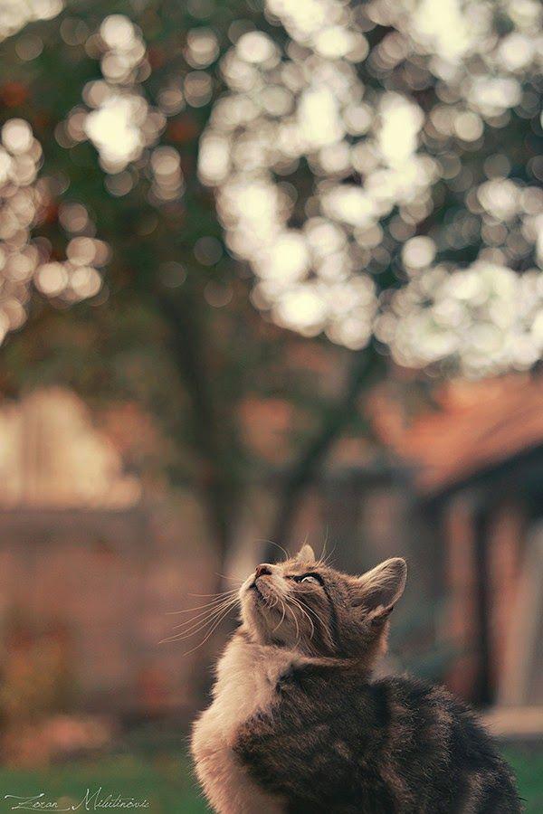 Pin Di Kucing Lucu