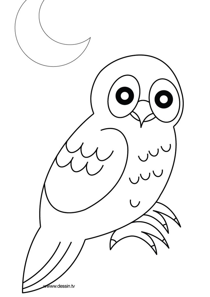 Best Owl Stuff Images On   Barn Owls Owl Coloring