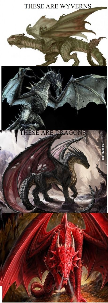 Wyverns vs Dragons. The number one thing that pisses me off when people call wyverns dragons (like it game of thrones). Get it right!! Wyverns are built more like birds, dragons are built like cats with wings.