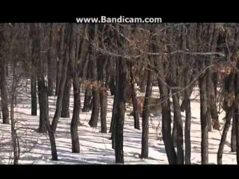Дальний Восток-настоящий край земли русской