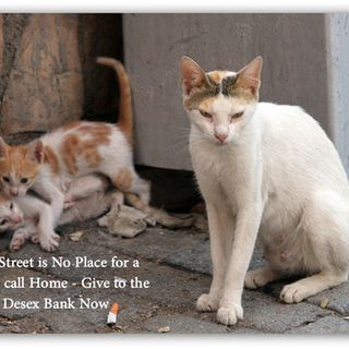 DESEX BANK - Maggie's Rescue is committed to desexing as many cats as possible   this Summer. But we can't do it without your help.   We have some fantastic vet partners who like us believe that the   cornerstone to cat control in the community is desexing.   With ...
