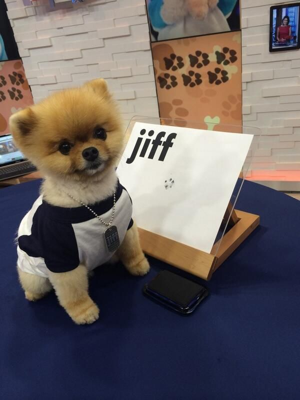 Dog vs. Dog is back & Jiff Pom has given his paw of approval! Go to our website http://gma.yahoo.com  for details!