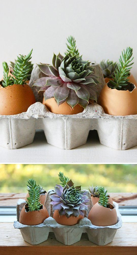 Indoor Gardening Projects • Ideas and Tutorials! Including this project, from 'the kitchn', learn how to plant succulents in eggshells.
