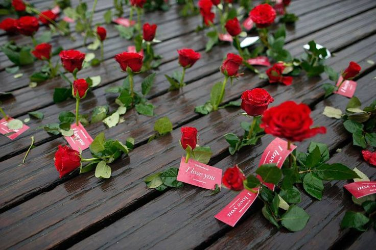 Flores e Paisagem no Pinterest  Jardins, Papéis de parede e Vídeos
