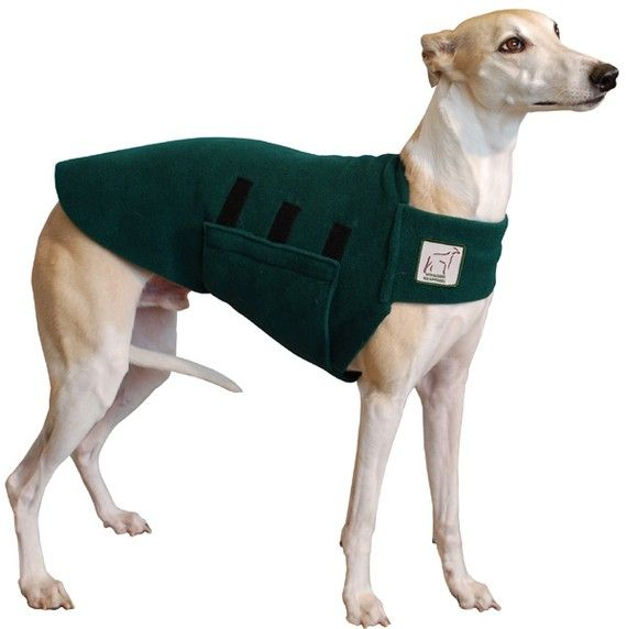 Whippet tummy warmer!Girls Pets, Dogs Stuff, Cute Pets, Tummy Pets, Whippets Tummy, Tummy Warmers, Pets Girls, Boys Pets, Pets Boys