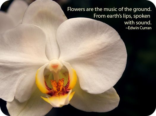 25 Best Flowers And Meanings Images On Pinterest Beautiful Flowers