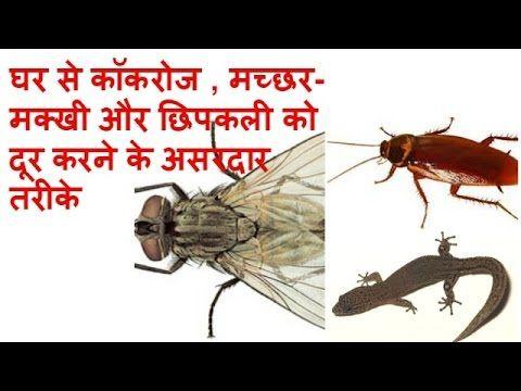 कॉकरोज , मच्छर-मक्खी और छिपकली को दूर करने के असरदार तरीके