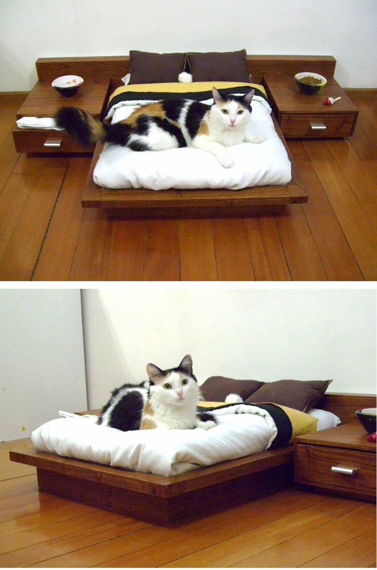 A platform bed for our cats, complete with night stands. Perfect for the crazy cat lover in your life.