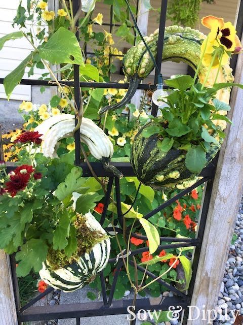 Crookneck gourd planter, more fall gourd decor ideas in this post!