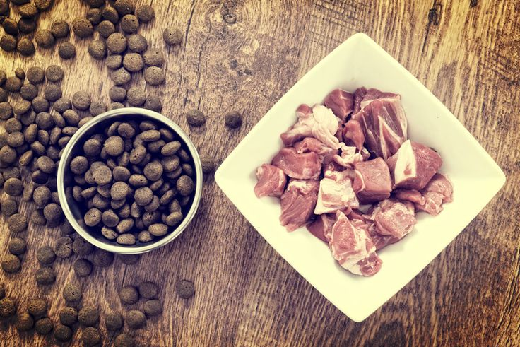 Best Holistic Dog Food: What to Look for in a Holistic Food