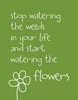 stop watering the weeds...  How often do we put our attention to the negativity that surrounds us? I'm going to make more of an effort to water my flowers (give my attention to the good in my life)