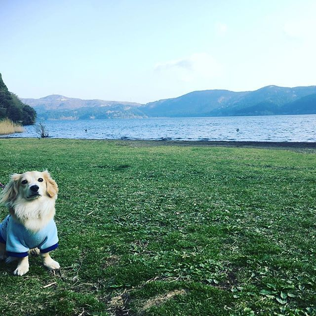 にょ。と湖♡  #湖 #lake #芦ノ湖 #箱根 #箱根園 #愛犬 #にょろ #ミックス犬 #小型犬 #パピヨン #ミニチュアダックス #マルチーズ #休日 #japan