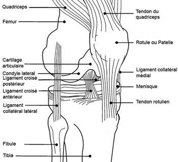 Articulation du genou                                                                                                                                                                                 Plus