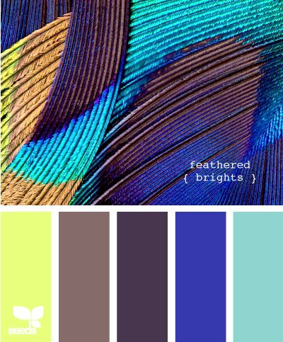 feathered brights. Need this as a reference. These are now the colors I want in my living room, now that I'm finally wanting to make it look all homey and stuff.