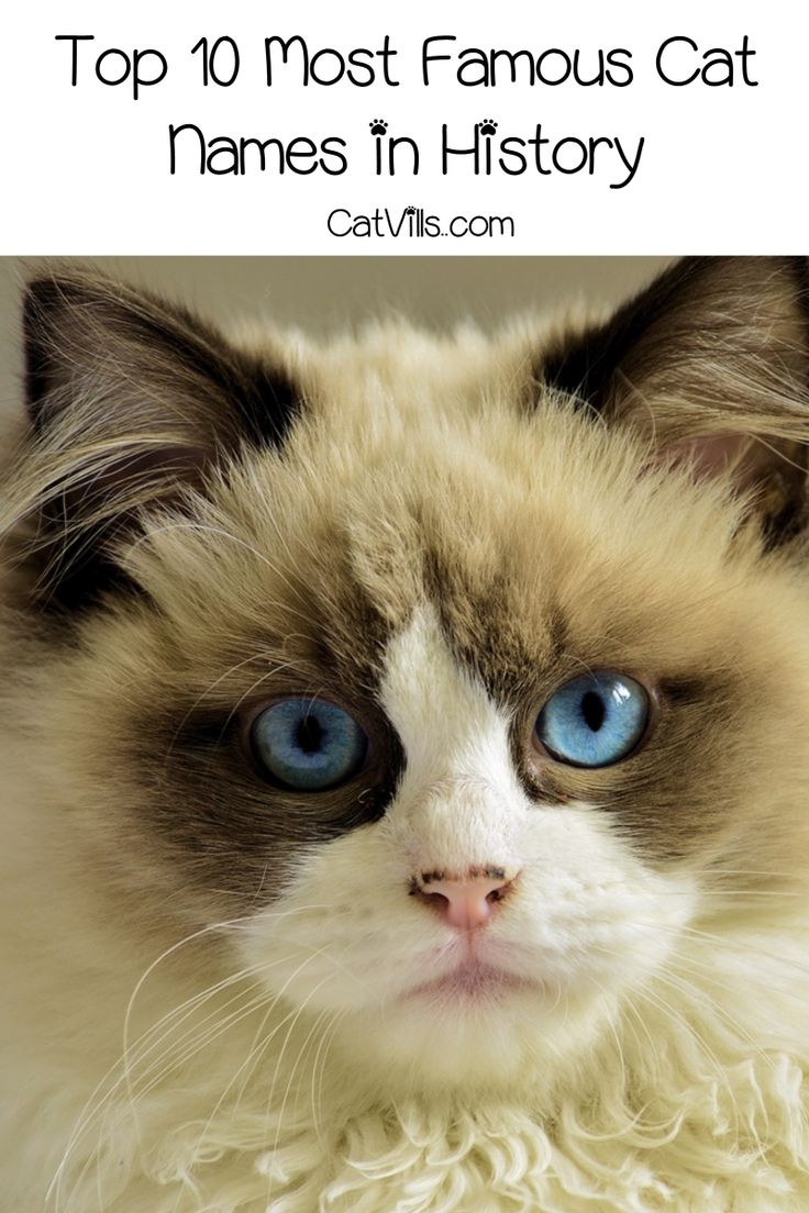 Top 10 Most Famous Cat Names in History Cat names, Cute