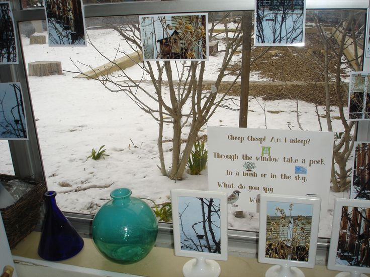 Our wonder window...surrounded by some of the snap shots we took of our observations...