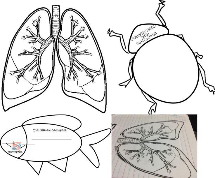 Fabuloso material interactivo de tipos de respiración, branquias, pulmones y tráquea en los seres vivos