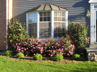 11 best images about bay window landscaping on pinterest for Front window landscaping ideas