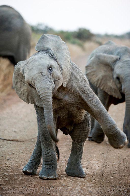 Baby elephant dance