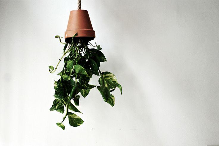 DIY Hanging plants ABCyou B&B
