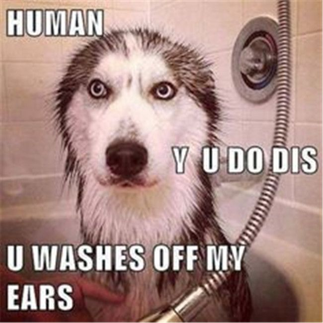 40 So Funny Dog    Pictures To Make You Laugh