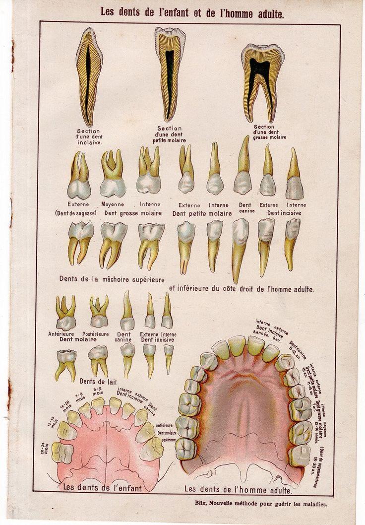 227 besten anatomy Bilder auf Pinterest | Antike drucke, Menschliche ...