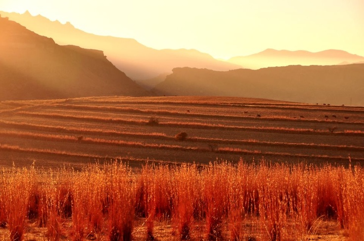 Early morning in Clarence - South Africa