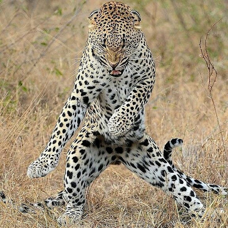 Gangnam style  - Rinku Singh - Google+