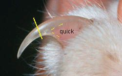 Some excellent photos to guide toe nail trims in cats.