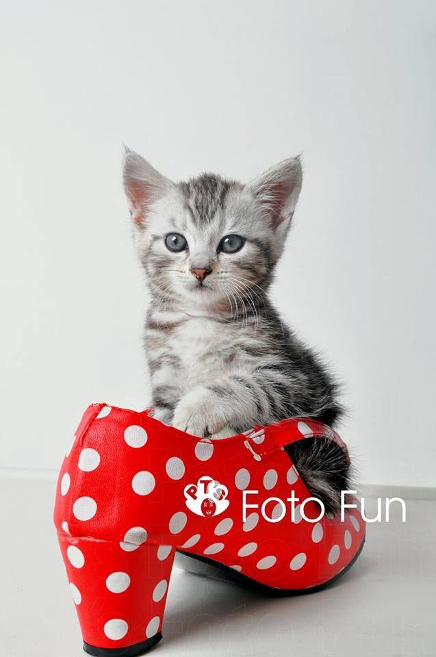 Little Kitten in Flamenca shoe