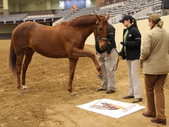 Funny Cide 2003 Kentucky Derby Winner Gives His Stamp Of Approval To