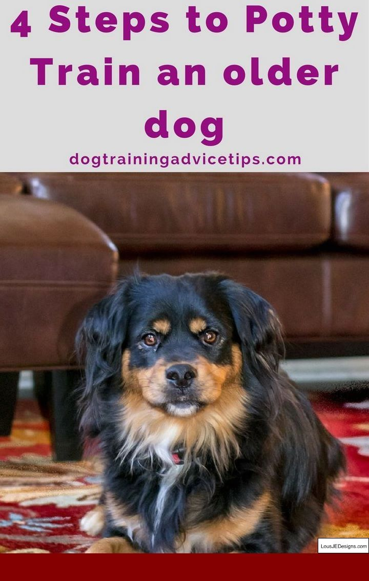 The Best Way To Potty Train Your Dog And Pics Of How To Leash