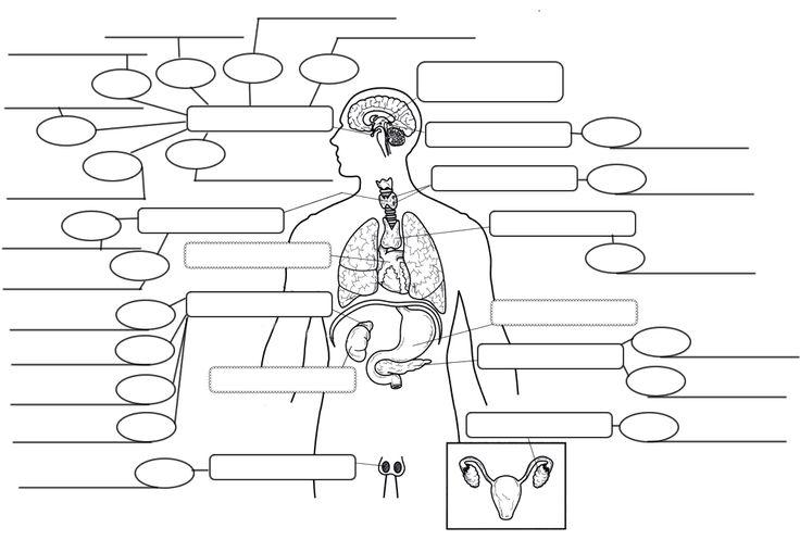 chemicalmunication diagram