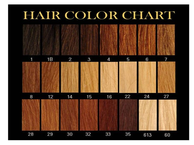 Honey Brown Hair Color Chart  Google Search  Hair Ideas  Pinterest  Blond