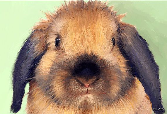 Holland Lop Portrait I Custom Holland Lop by PetPortraitsbyNC