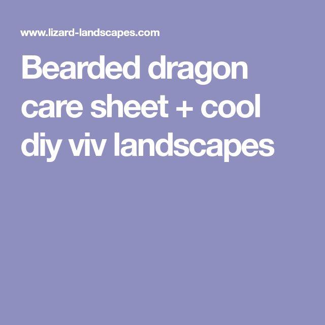 Bearded dragon care sheet + cool diy viv landscapes