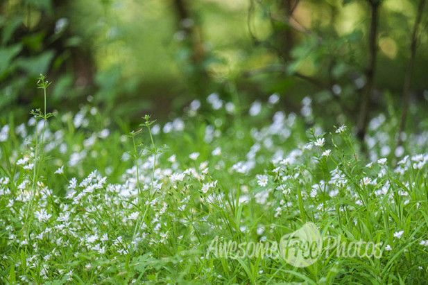 83-awesomefreephotos-flowers-forest-spring-nature-750