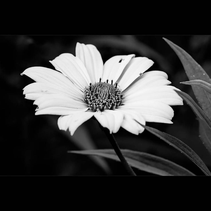 Flowers without colours can be beautiful... #toronto #flowers
