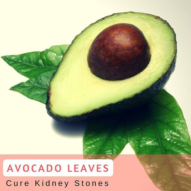 The health benefits of avocado leaves are the most potent for kidney stones, the essential content of various substances in avocado leaves can help eradicate kidney stones. The content alkaloid, flavonoids, and saponins are substances that are very powerful in destroying kidney stones that can improve kidney function perfectly.  #USimplySeason #spices #AvocadoLeaves  Source: THealth