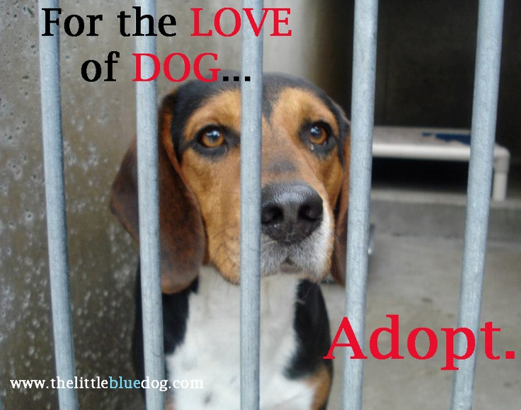 Please choose adoption!