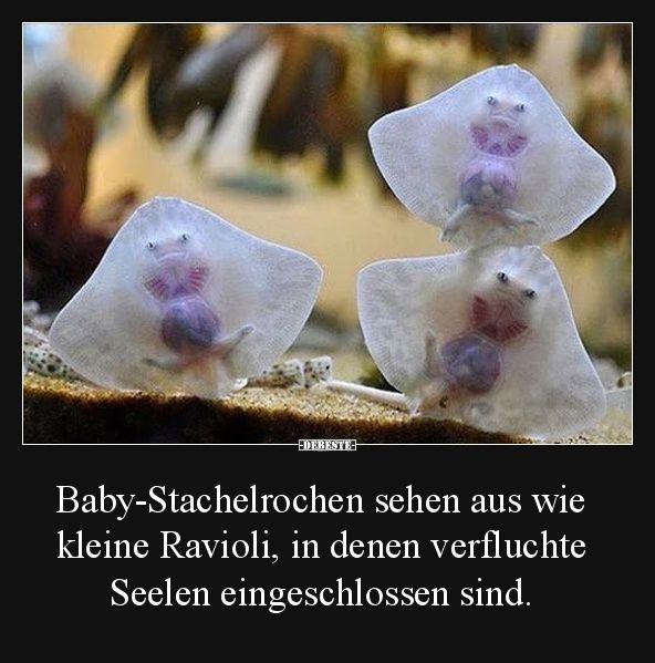Baby-Stachelrochen sehen aus wie kleine Ravioli.. | Lustige Bilder, Sprüche, Witze, echt lustig