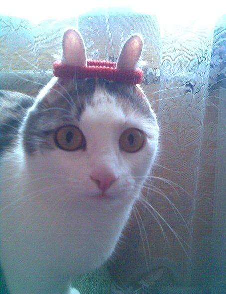 Cat-bunny :)