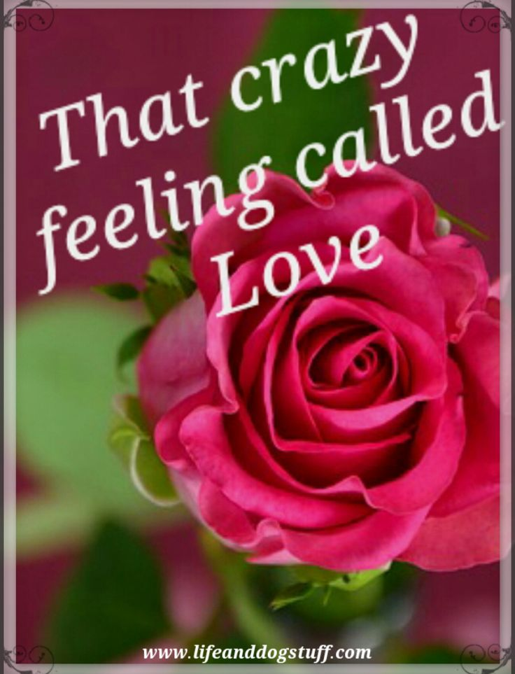 That Crazy Feeling Called Love. #blogger #blog