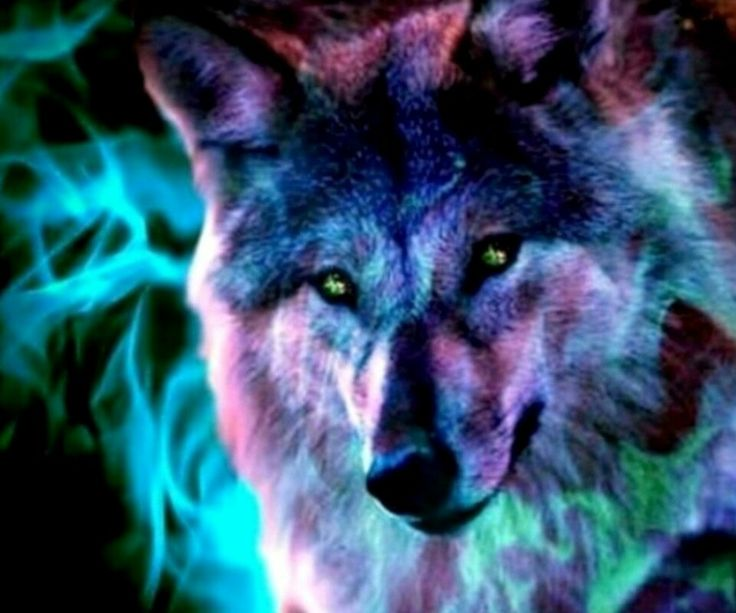 wolf wallpapers ndash animal - photo #44