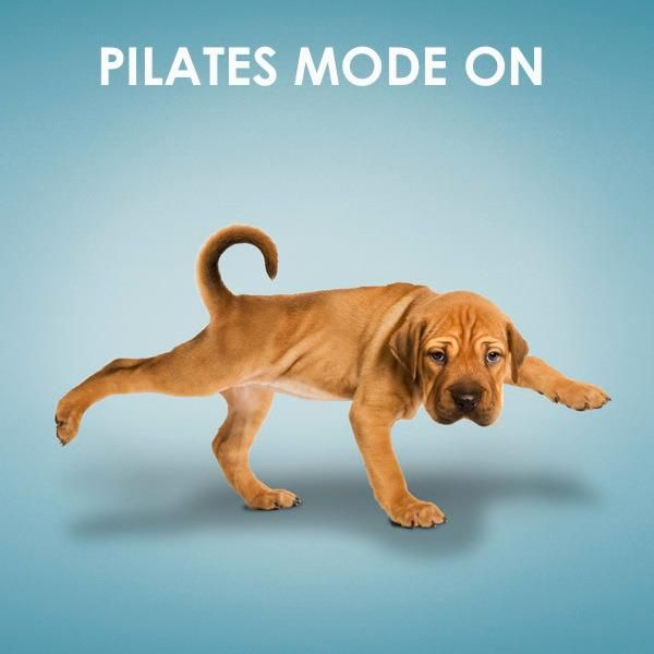 Pilates pup. If this guy can do it, it can't be that ruff