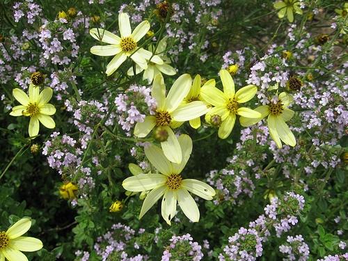 Flower Garden Ideas Colorado 99 best perennial flowers images on pinterest   flowers, flowers