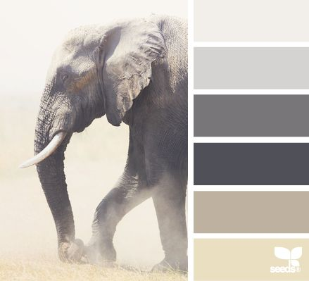 Elephant Tones - http://design-seeds.com/index.php/home/entry/elephant-tones