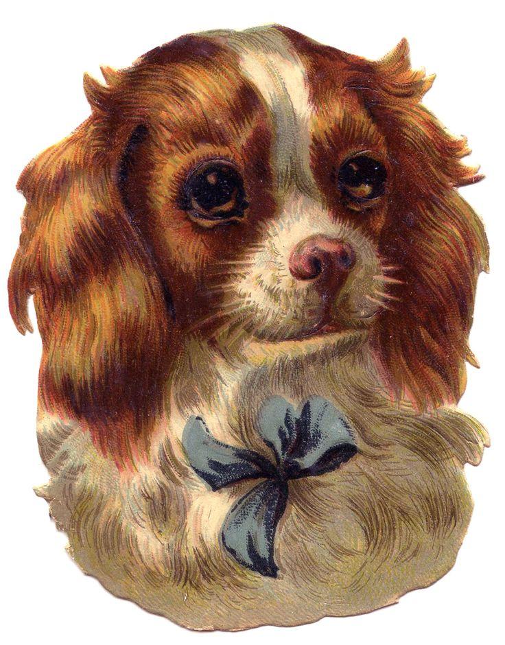 vintage dog pictures | The Graphics Fairy LLC*: Vintage Image - Cute Dog - Spaniel